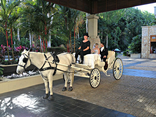 Horse and Carriage - Palm Cove